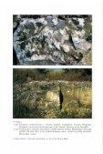 letölthető pdf - Bakonyi Természettudományi Múzeum - Page 2