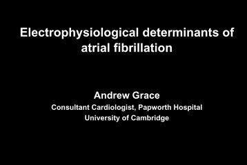 Electrophysiological Determinants of Atrial Fibrillation