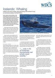 Icelandic whaling industry
