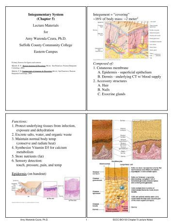 integumentary system study guide answer Having trouble with integumentary questions skyrocket your test scores with our  free integumentary quiz practice, and pass that important exam  integumentary  system quiz addthis sharing buttons share to  answer key 1 a 2 d 3 b 4.