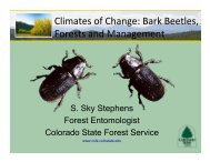 Climates of Change: Bark Beetles, Forests and Management - cmmap