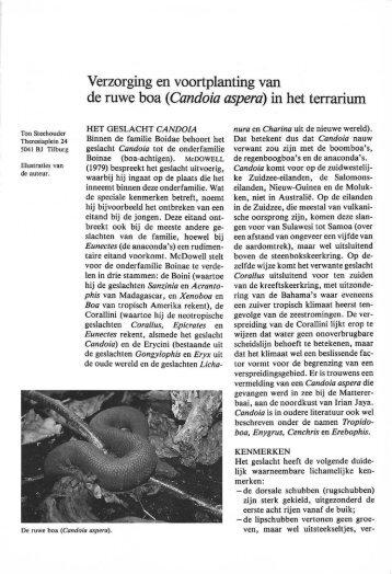 (Candoia aspera) in het terrarium - Lacerta