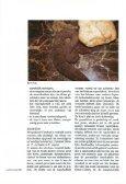 (Candoia aspera) in het terrarium - Lacerta - Page 2