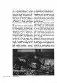 (Candoia aspera) in het terrarium - Lacerta - Page 4
