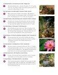 BACKYARD BACKYARD - Earthworks - Page 3