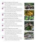 BACKYARD BACKYARD - Earthworks - Page 4