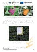 Hollannin viljelijämatkan raportti - Satafood Kehittämisyhdistys ry - Page 4