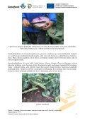 Hollannin viljelijämatkan raportti - Satafood Kehittämisyhdistys ry - Page 5