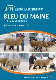 British Bleu du Maine Sheep - Harrison & Hetherington