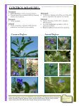 Common and Annual Bugloss - Lincoln County - Page 2