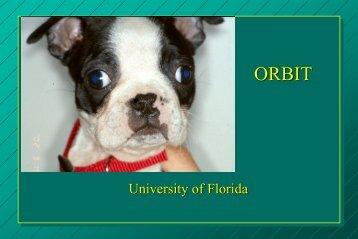 University of Florida - Small Animal Hospital