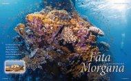 Fata Morgana - Nautilus Tauchreisen