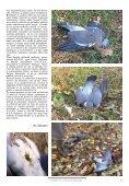 Dezastrul Total al protecției animalelor de pradă În lumea ... - AGVPS - Page 5