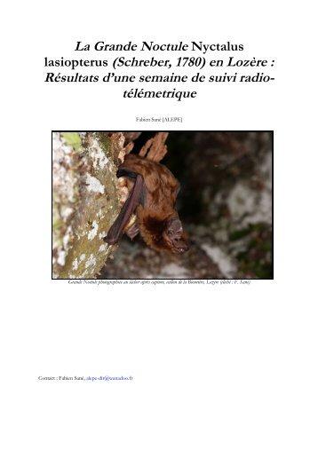 La Grande Noctule Nyctalus lasiopterus (Schreber ... - Le Vespère