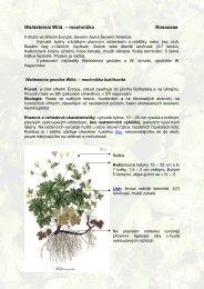 Waldsteinia Wild. – mochnička Rosaceae