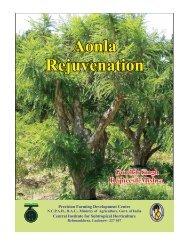 Aonla Rejuvenation Aonla Rejuvenation