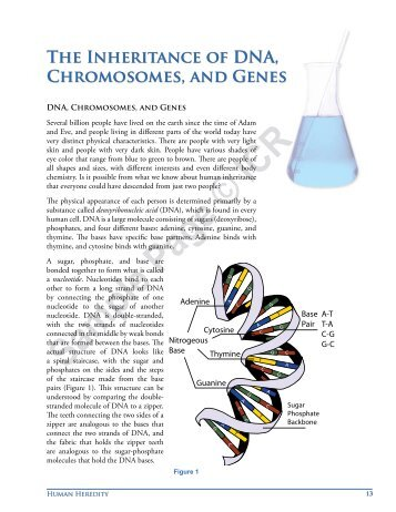 The Inheritance of DNA, Chromosomes, and Genes
