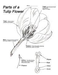 Tulip Flower Parts - Monique Art