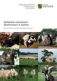 Gefährdete einheimische Nutztierrassen in Sachsen