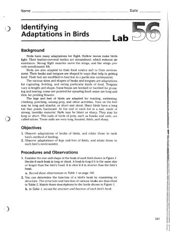 An Experiment Of Adaptation Lab Report