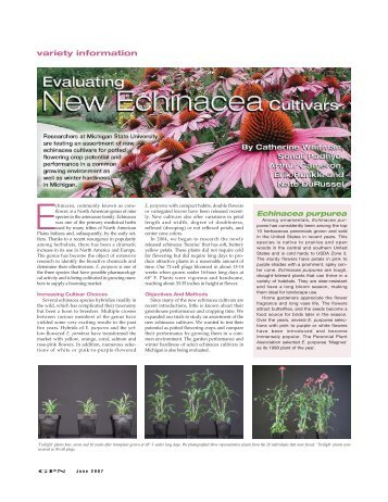 Evaluating new Echinacea cultivars - Floriculture at Michigan State ...