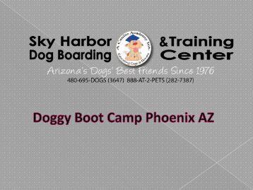Doggy Boot Camp Phoenix AZ