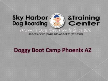 Doggy Boot Camp Phoenix AZ