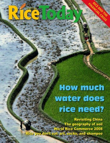 How much water does rice need? - adron.sr