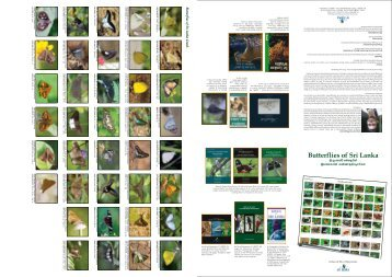 SLTPB Poster Butterflies of Sri Lanka (2010 03 26) eEdition ... - WHT