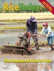 The future of rice in Asia - adron.sr