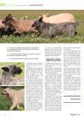 Unsere Autorin - Bouvier des Ardennes - Seite 3