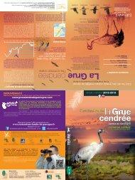 La Grue cendrée - Ecotourisme dans les Landes de Gascogne