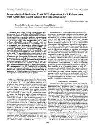 Immunological Studies on Plant DNA-dependent RNA Polymerases ...