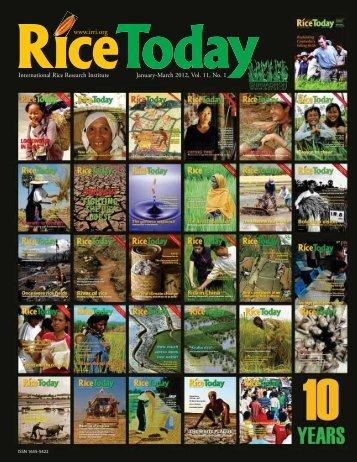 Rice - adron.sr