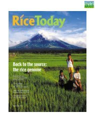 Rice Today/web - adron.sr