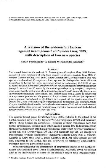 A revision of the endemic Sri Lankan agamid lizard genus ... - WHT