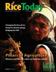 Women rice farmers labor to feed the world - adron.sr