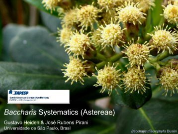 Baccharis Systematics (Astereae) - Fapesp