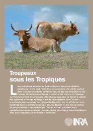 Troupeaux sous les tropiques - TransFAIRE - Inra