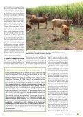 Troupeaux sous les tropiques - TransFAIRE - Inra - Page 7
