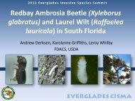 Redbay Ambrosia Beetle (Xyleborus glabratus) and Laurel Wilt ...