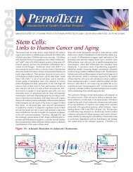 Stem Cells: