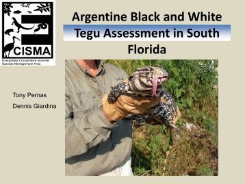 Argentine Black And White Tegu Assessment In South Florida
