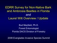 Early Detection of the red bay ambrosia beetle - Everglades ...