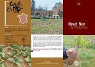 Le navet noir de Pardailhan - Slow Food France