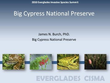 Big Cypress National Preserve - Everglades Cooperative Invasive ...