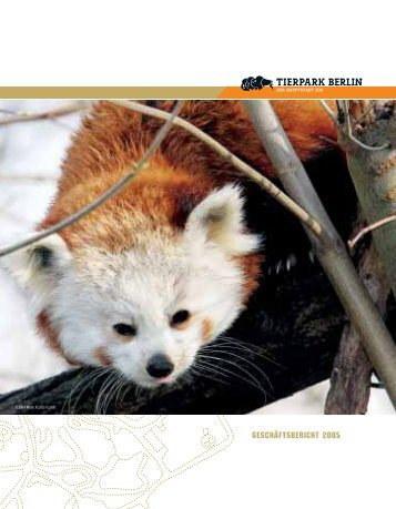 KLEINER PANDA, AILURUS FULGENS - Zoo Berlin