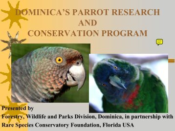 Dominica's Parrot Monitoring and Research Program - Rare Species ...