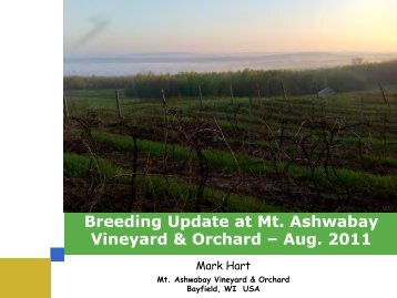 Breeding Update at Mt. Ashwabay Vineyard & Orchard ... - Mavo.biz