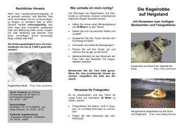 Die Kegelrobbe auf Helgoland - Freunde und Förderer der ...